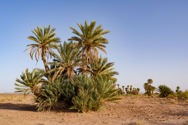 Palm clusters near M'Hamid